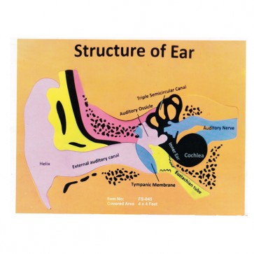 Structure of Ear Foaming Sheet